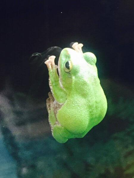 カエル 皮膚