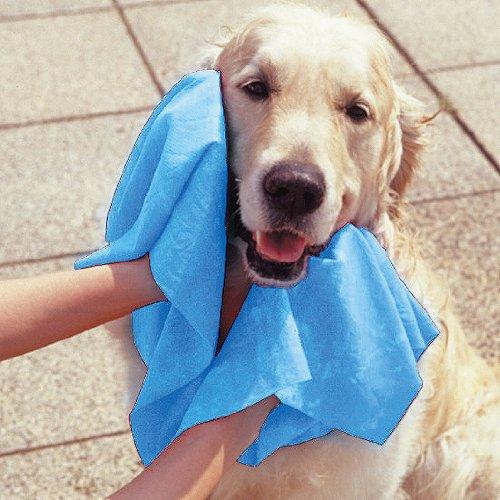 タオルで拭かれる犬