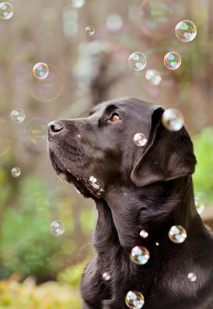 犬とシャボン玉
