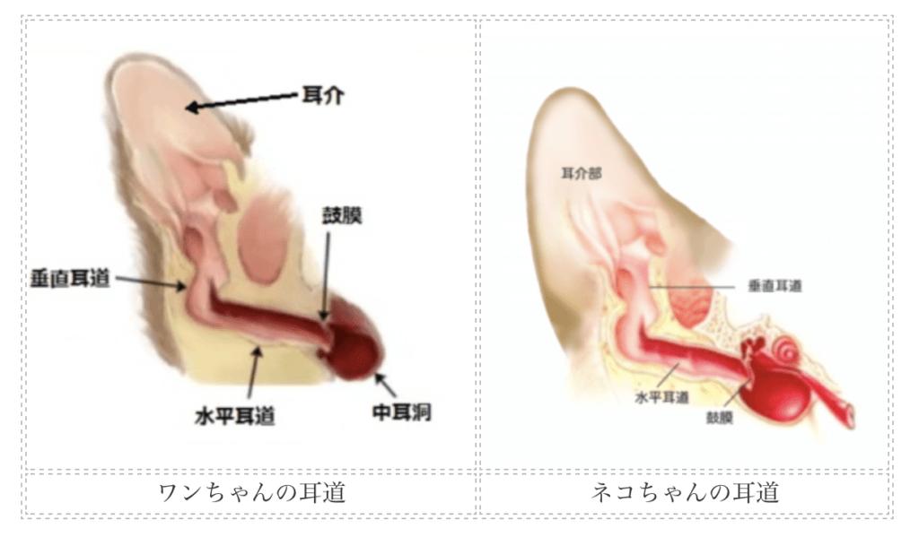 犬と猫の耳道