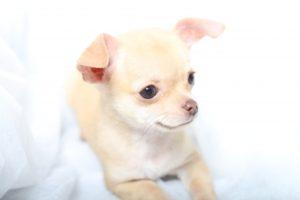 犬 リンスインシャンプー コンディショナー