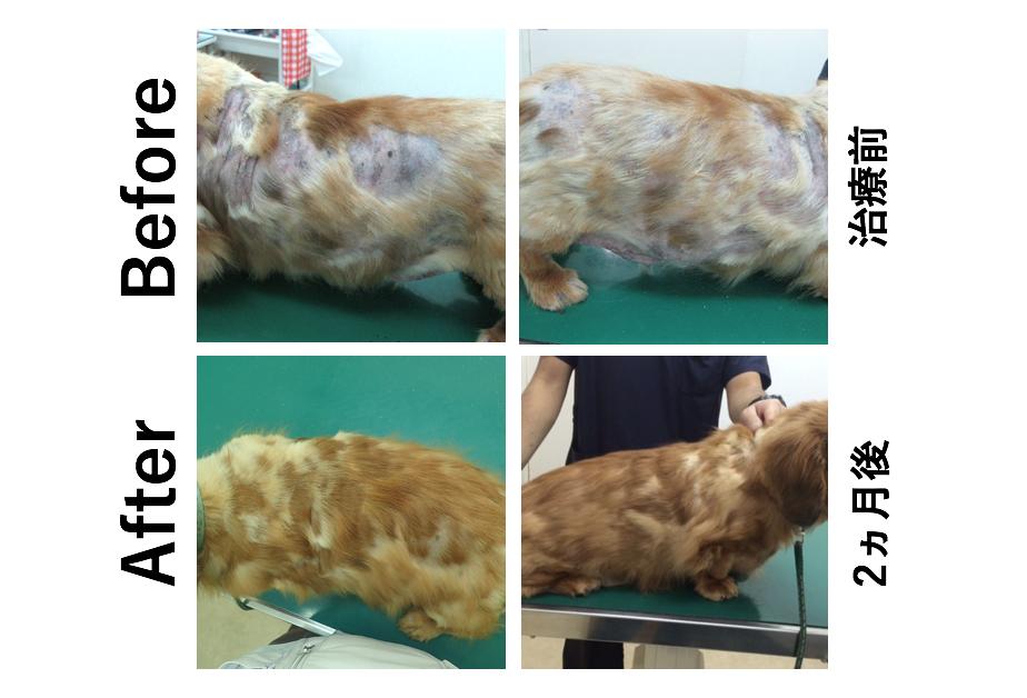 犬 外用薬 アトピー性皮膚炎 再発性膿皮症 改善