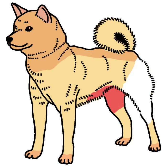 犬 アトピー