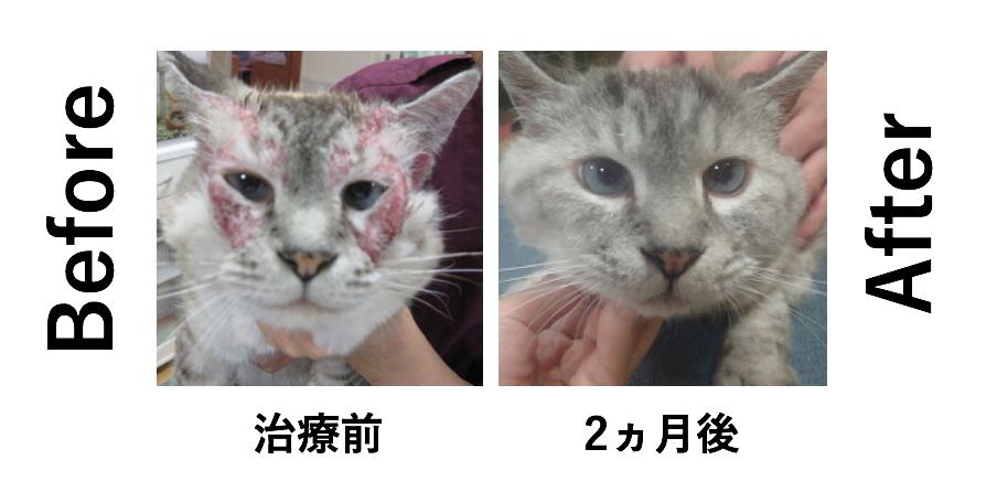 猫 過敏性皮膚炎 治療