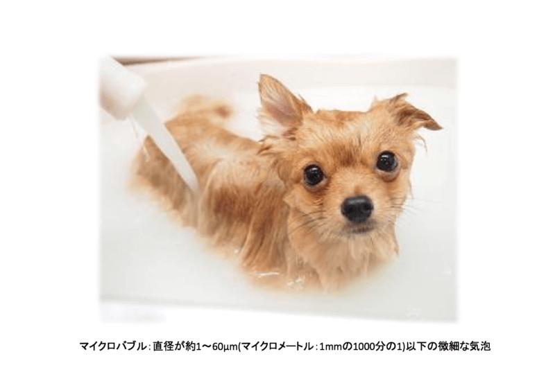 犬 マイクロバブル