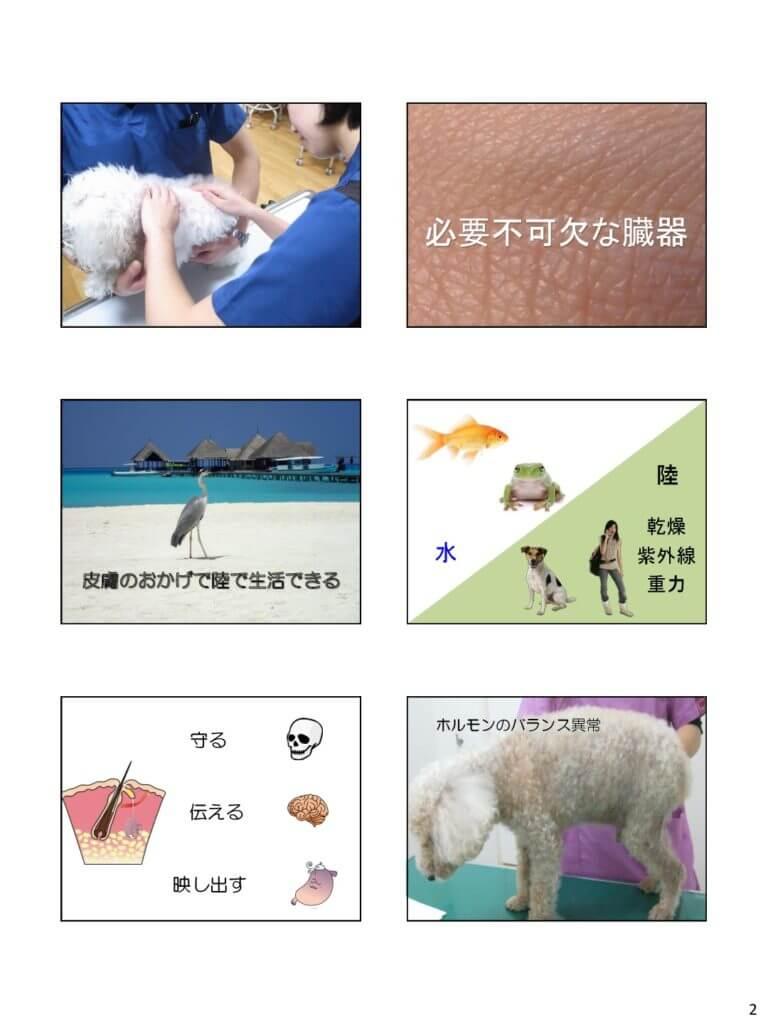 茨城県獣医師会 セミナー スライド