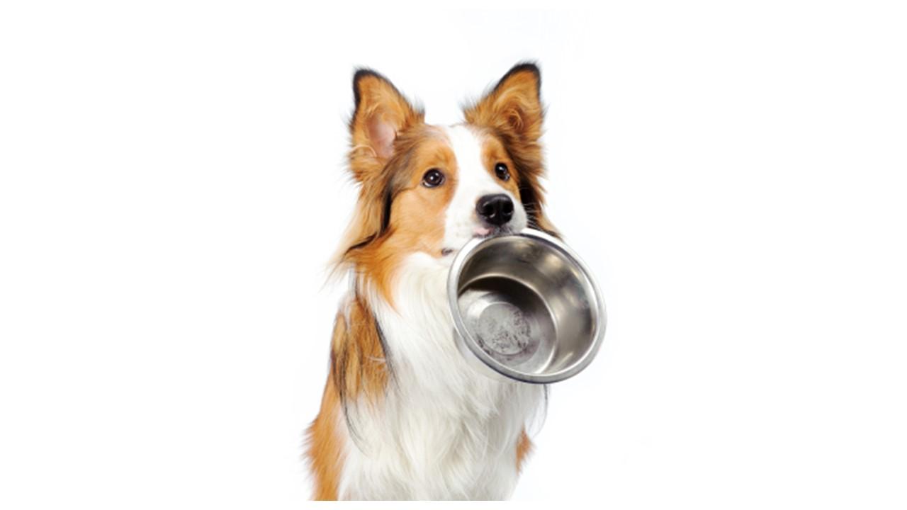 犬猫 アレルギー用の食事