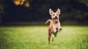 遊び回る犬