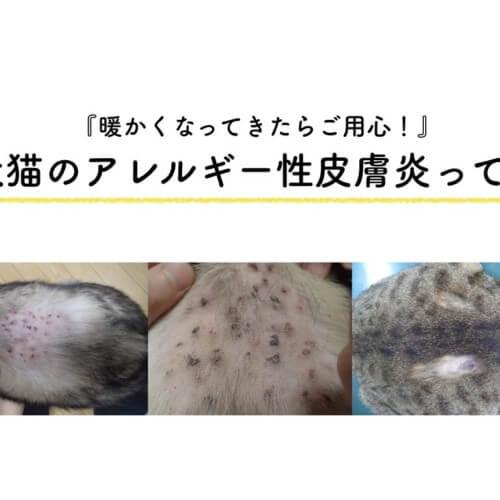 犬猫 ノミアレルギー性皮膚炎
