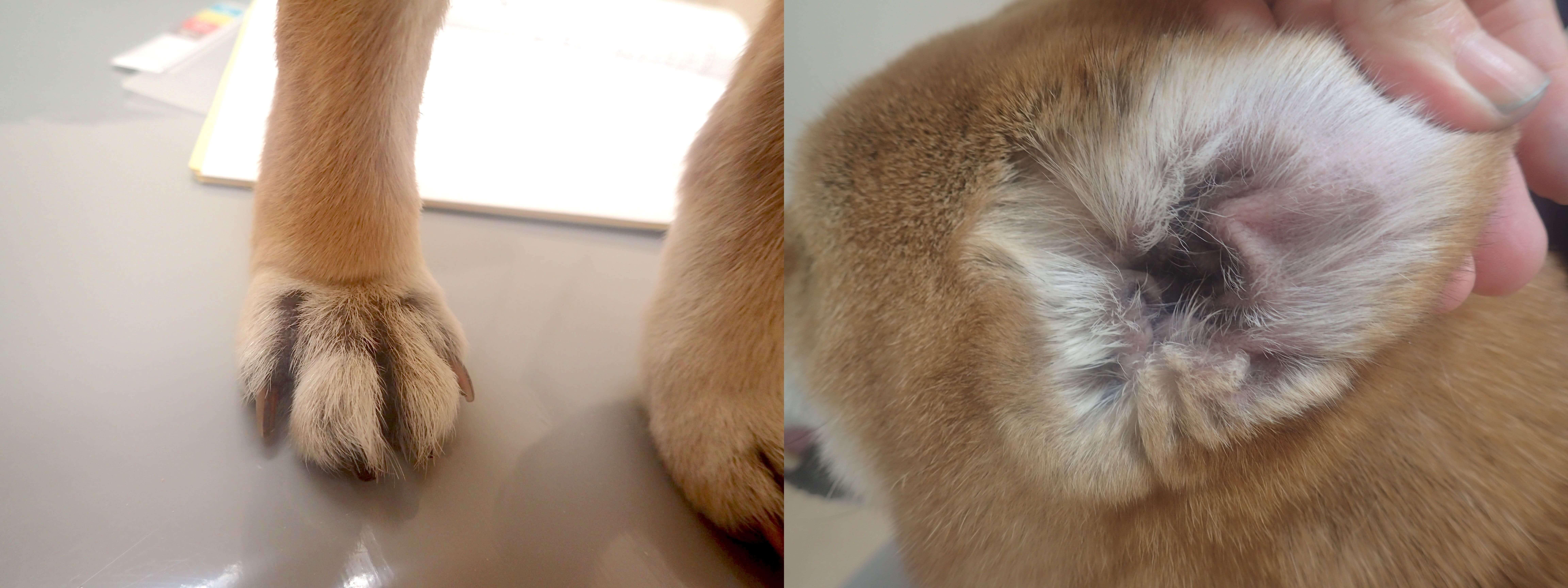 皮膚が改善した写真