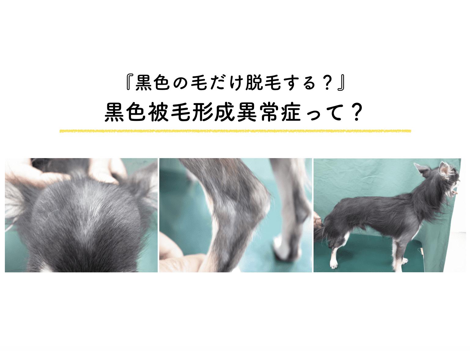 犬 黒色被毛形成異常症