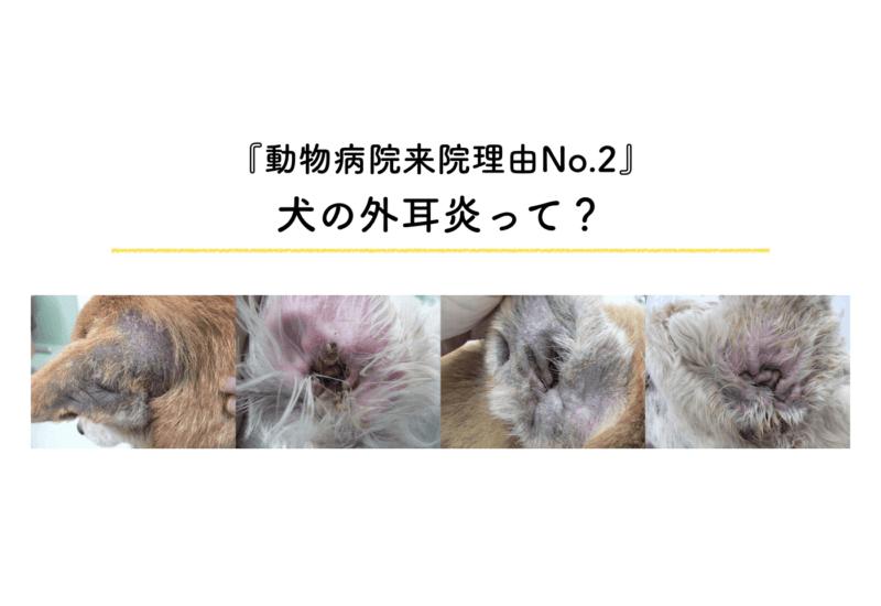 犬 外耳炎