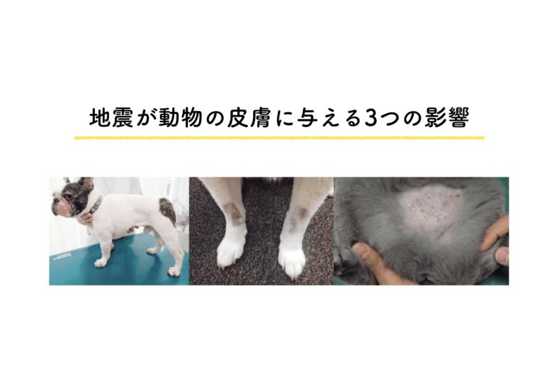 地震が動物の皮膚に与える3つの影響