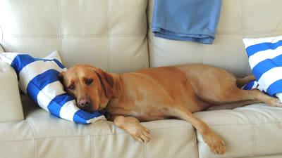 寝ている犬の写真