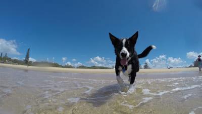 夏を楽しむ犬