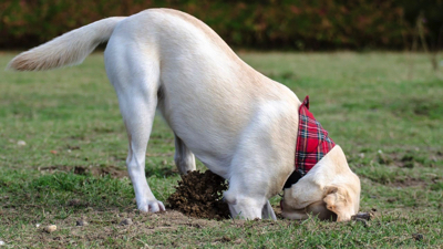 土を掘る犬