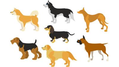 犬種の写真